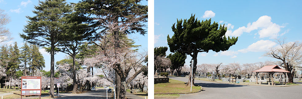 千葉市桜木霊園